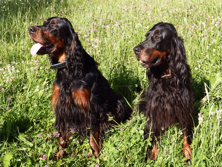 Indy links und Alaska